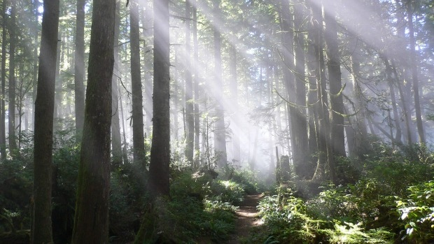 Great Bear Rainforest Agreement a Victory for Forestry Industry