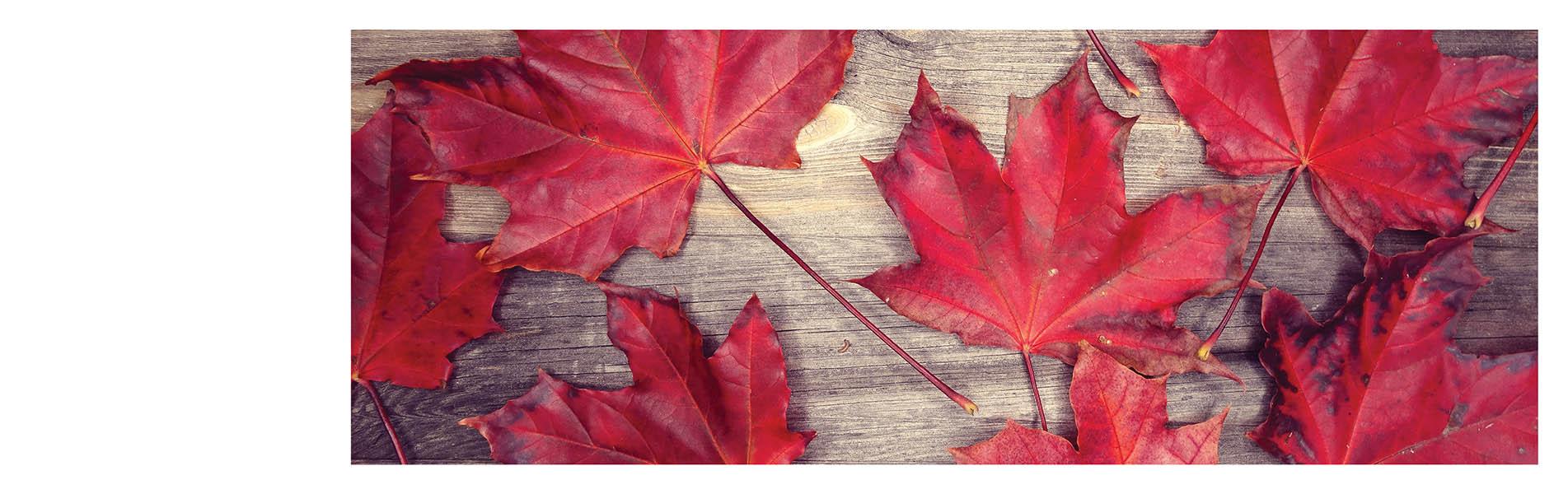 4. Canadian Owned Banner desktop - Home